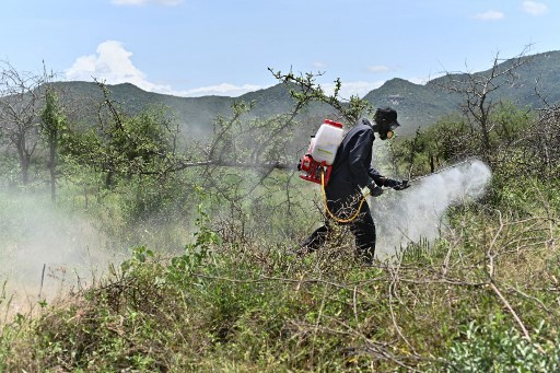 A community volunteer uses a motorised spray to disperse pesticide on February 25, 2020 at a hatch site near Isiolo town in Isiolo county, eastern Kenya, where locust nymphs have hatched en masse. Millions of locust nymphs have emerged from eggs left behind by swarms that invaded the region last month and the situation remains extremely alarming in the Horn of Africa, according to the UN's Food and Agriculture Organization (FAO) specifically Kenya, Ethiopia and Somalia where widespread breeding last month is now giving rise to new swarms. TONY KARUMBA / AFP