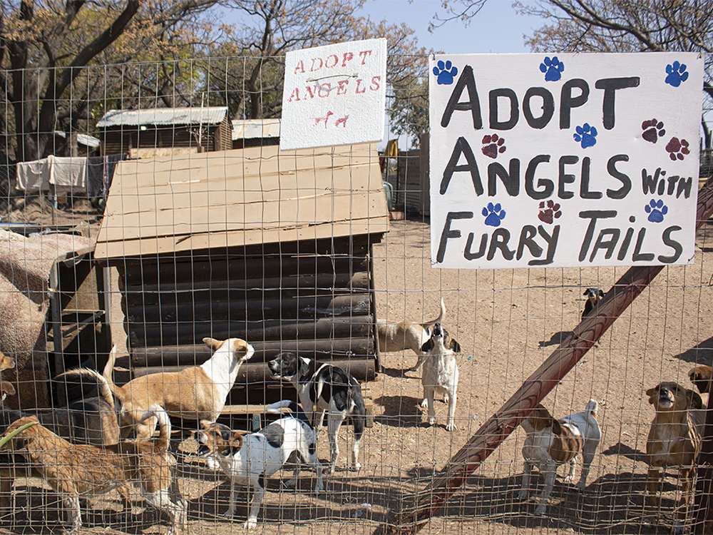 Kosmos, Tshwane. Hundreds of dogs populate the Paws Love Animal Shelter waiting for a family to adopt them. ©Manash Das.