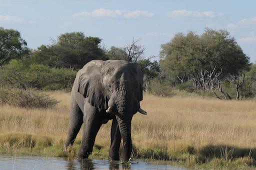 In the past two months, more than 360 elephant carcasses have been spotted during aerial surveys of wildlife in the Okavango Delta in northern Botswana.